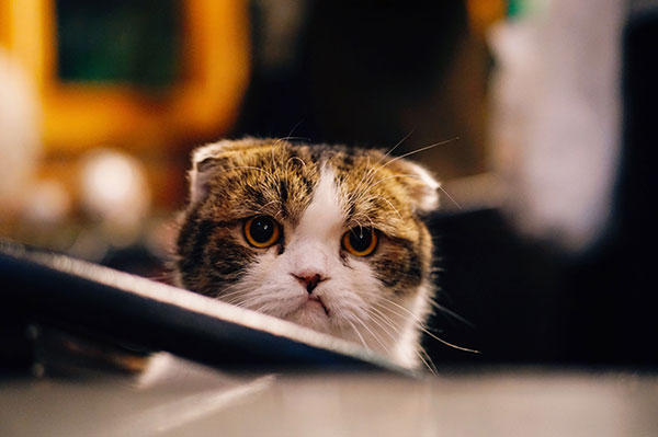 an angry and grumpy cat